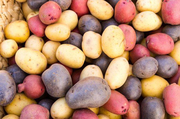 Ценную информацию о времени созревания предоставляет сорт картофеля