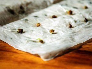 «Циркон» можно заменить соком алоэ, настоем ромашки, раствором золы