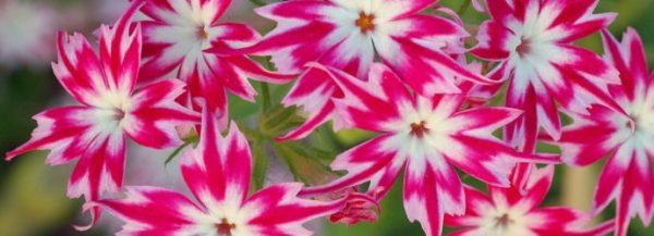 Цветки на солнце