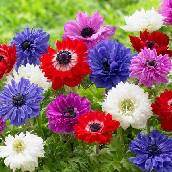 Цветы на солнце