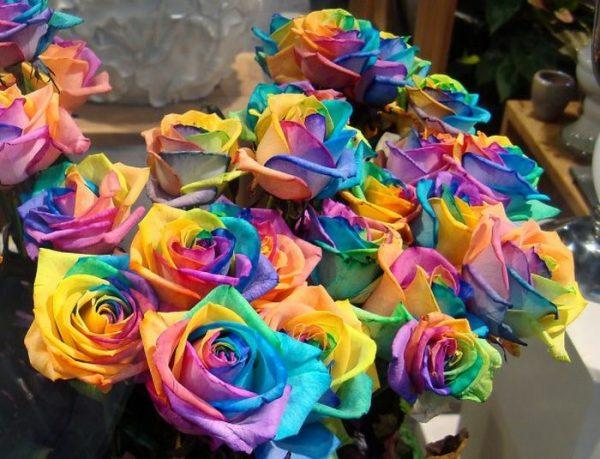 Цветы, полученные в результате выращивания, далеко не всегда соответствуют фотографиям на упаковке семян