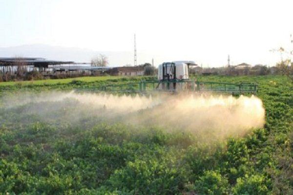 Десикация, как правило, осуществляется на крупных огородах и не используется на частных хозяйствах