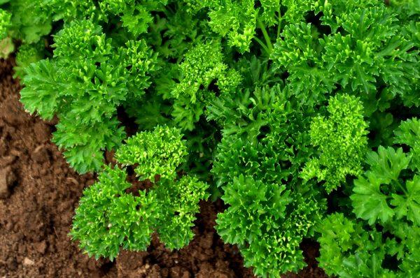 Для хорошего урожая нужны определенные условия