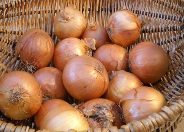 Для выращивания следует подбирать только здоровые и крепкие экземпляры