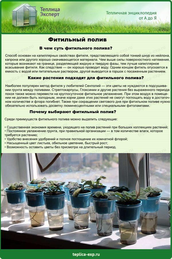 Фитильный метод полива комнатных растений