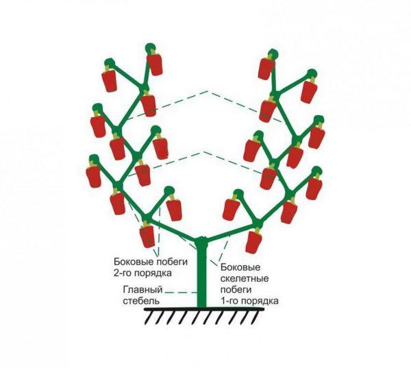 Формирование высокорослого растения