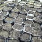 Готовят отдельные емкости для каждого растения и наполняют их землей