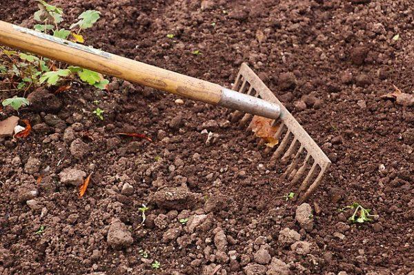 Грунт необходим рыхлый, без крупных комьев земли
