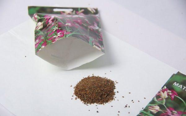 Из семян маттиолы выращивают рассаду