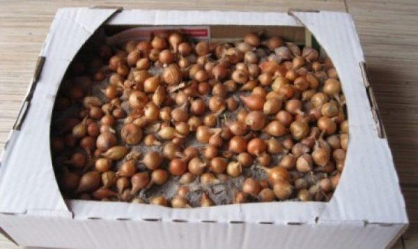 Хранить лук-севок рекомендуется в мешках или коробках
