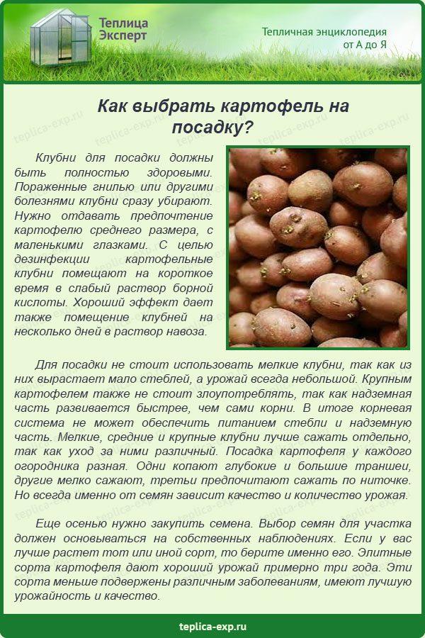 Как выбрать картофель на посадку?