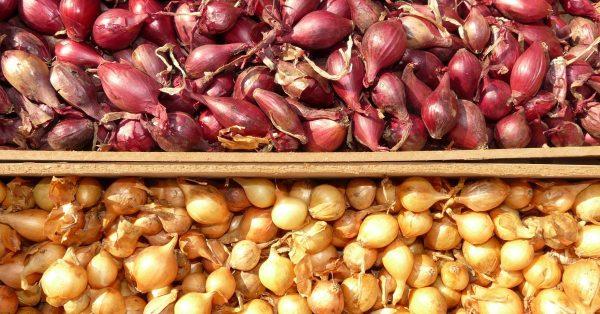 Как самому вырастить лук-севок?
