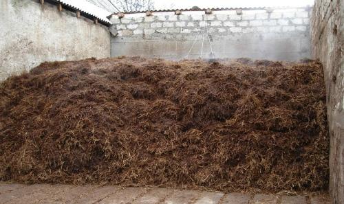 Готовый компост для выращивания шампиньонов