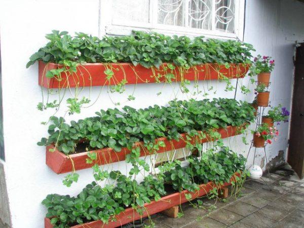 Контейнеры для выращивания клубники на балконе