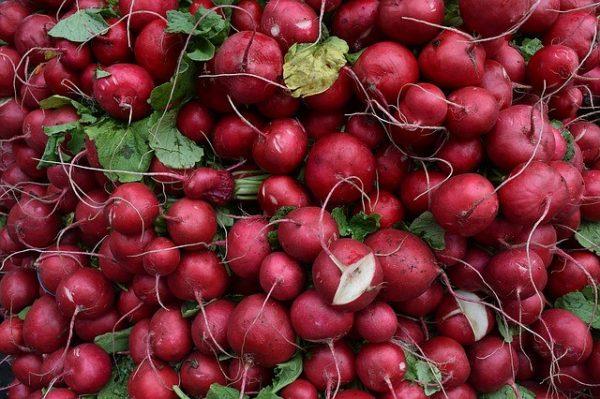 Корнеплоды среднеранних и поздних сортов весят от 30 до 70 г