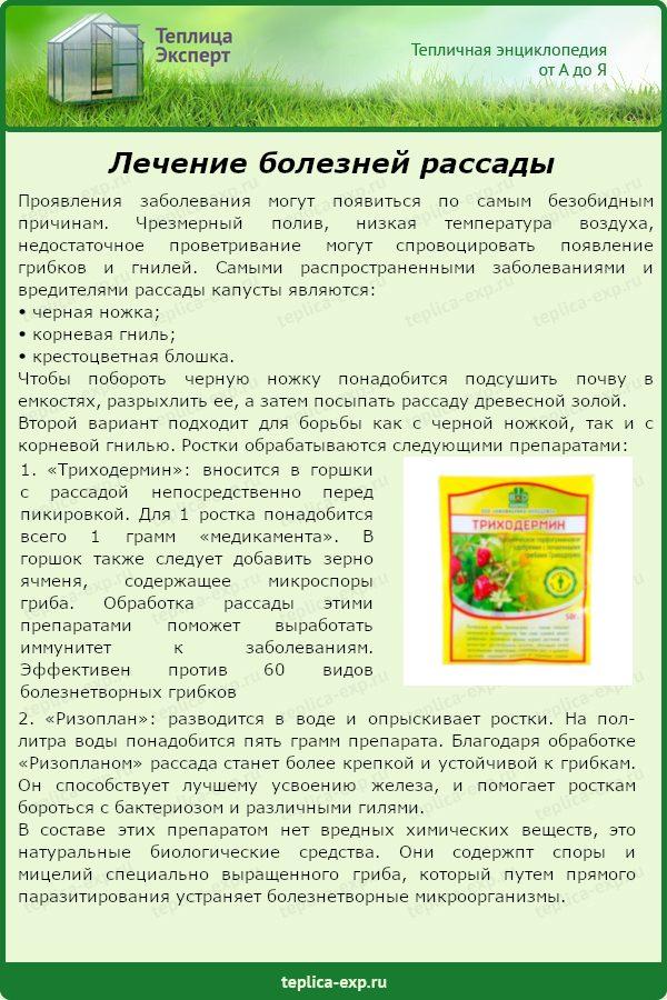 Лечение болезней рассады
