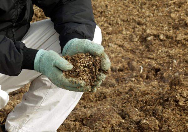 Луковым посадкам нужна рыхлая, плодородная почва