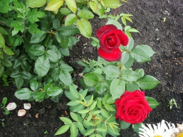 Молодые растения требуют тщательного ухода