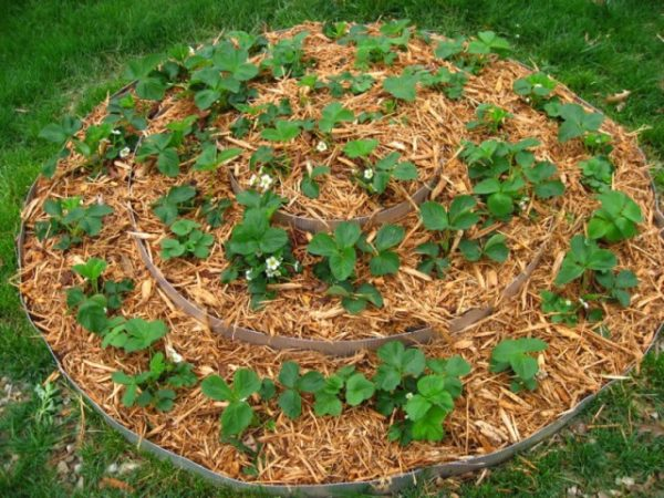 Мульчирование позволяет почве сохранять свои питательные вещества в лучшем виде