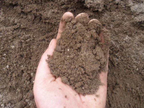 На супесчаных почвах получают более чистый урожай