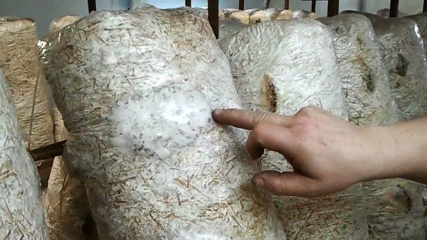 На свет грибы не выставляют до появления первых всходов