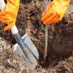 Начните закапывать землю, периодически неё приминая.