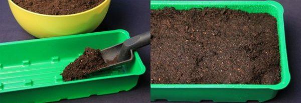 Наполнение контейнера почвой