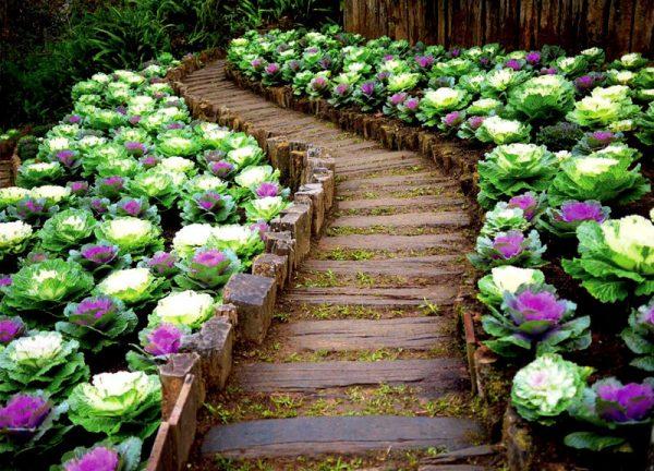 Новый тренд садового дизайна