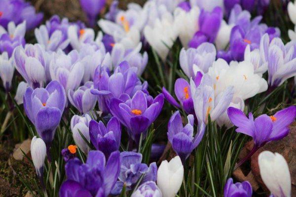 Обильное цветение после подкормки