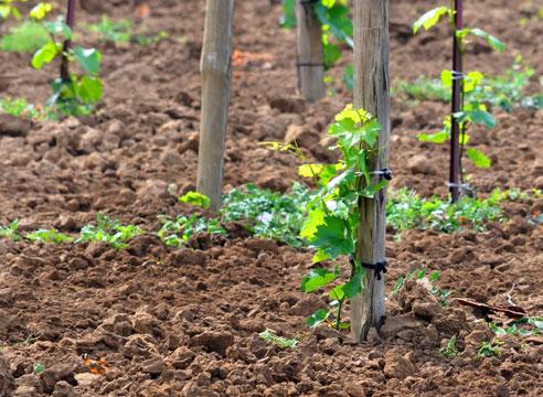 Опытные садоводы подскажут, как сделать все правильно с первого раза