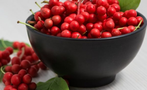 Свежие ягоды лимонника китайского