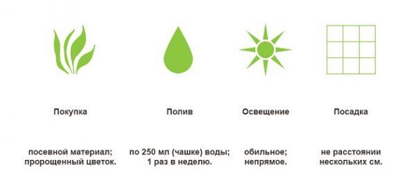Основные этапы ухода за растением