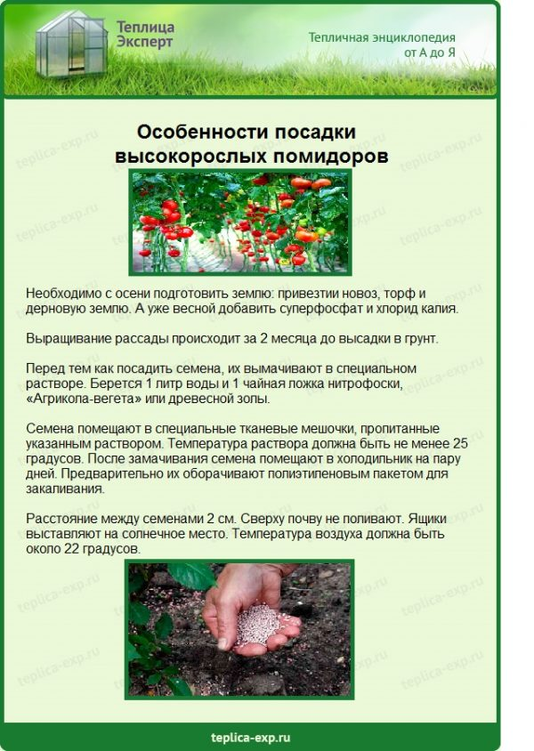 Особенности посадки высокорослых помидоров