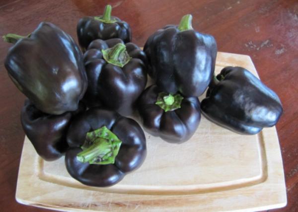 Перец Кардинал темно-фиолетового цвета