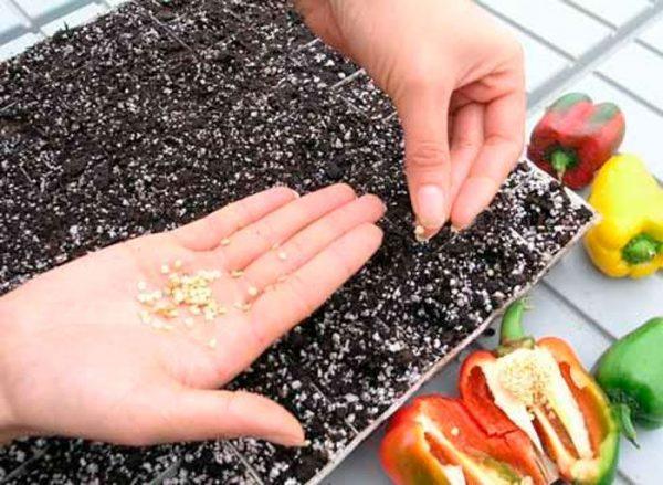 К выбору семян необходимо подходить серьёзно