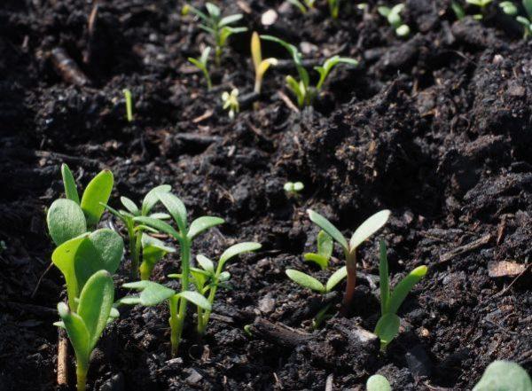 Почва в Северо-западном регионе отличается низкой плодородностью