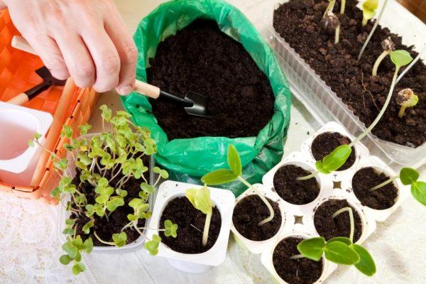 Почвосмесь позволит хрупким сеянцам прорасти и окрепнуть быстрее