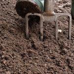 Как в домашних условиях выращивать георгины?