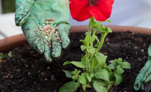 Подкормка цветущего растения