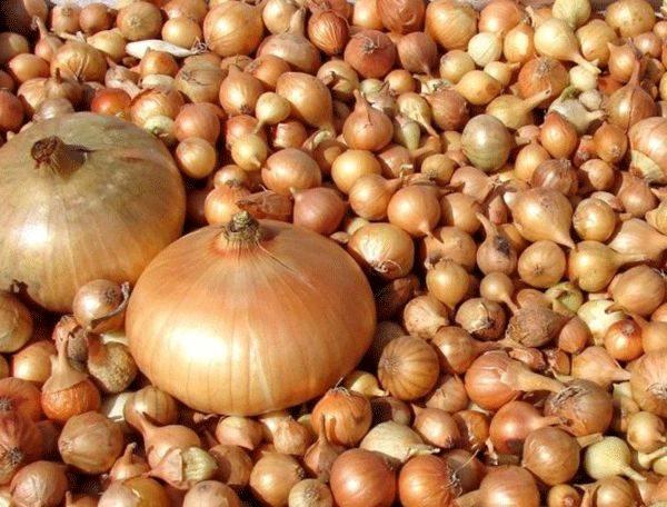 Полученный урожай в сравнении с посаженным