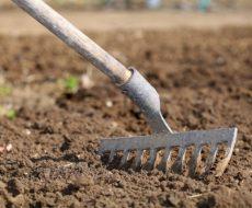 Подготовка земли под посадку этого экзотического фрукта проводится в несколько этапов