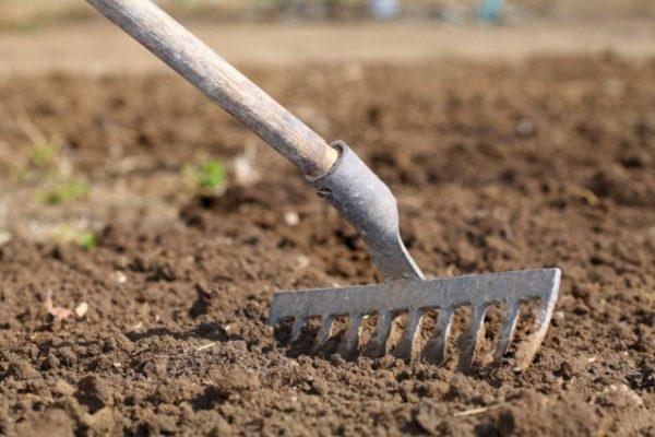Как и чем удобрить землю осенью
