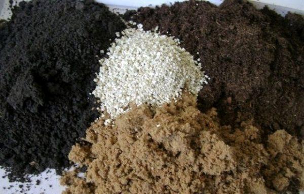 Правильно подобрання почвосмесь способствует скорейшему прорастанию семян