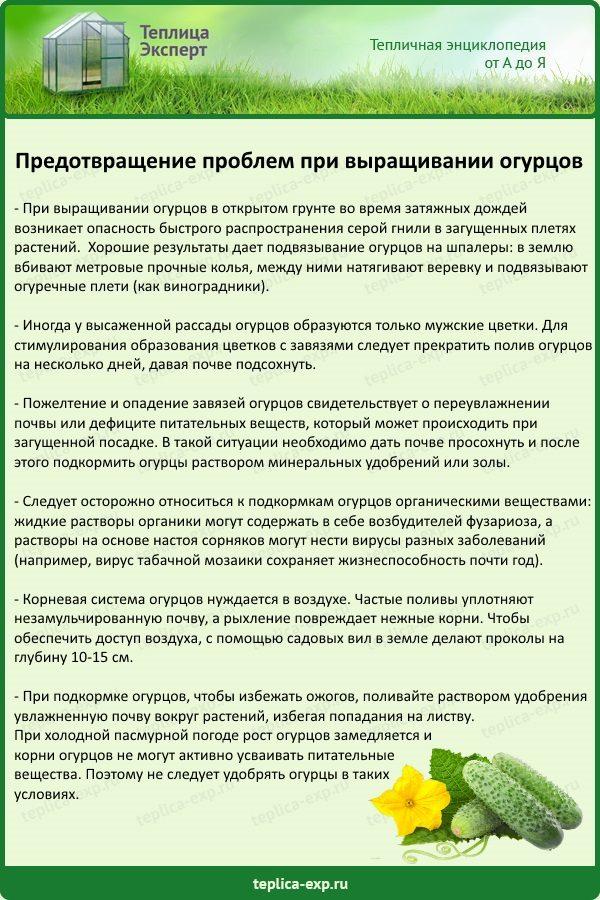 Предотвращение проблем при выращивании огурцов