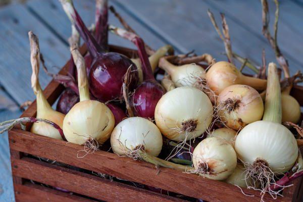 При хранении лука Кармен влажность не должна превышать 65-70%