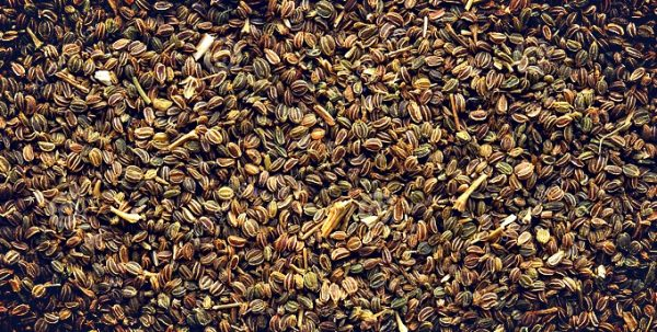 Раннеспелые семена более предпочтительны для выращивания в России