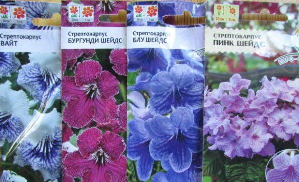 Различные виды семян стрептокарпуса