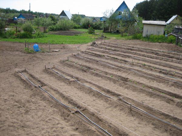 Разметка участка для посадки картофеля