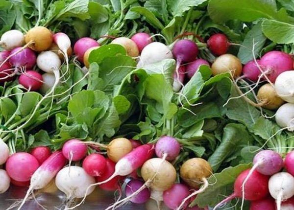 Разнообразие плодов редиса