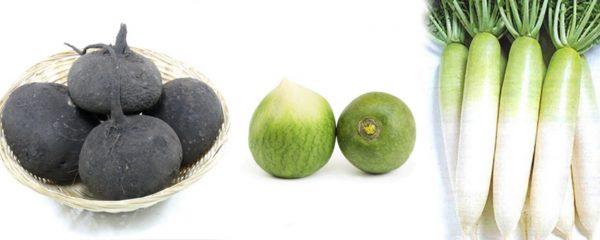 Разнообразие плодов редьки